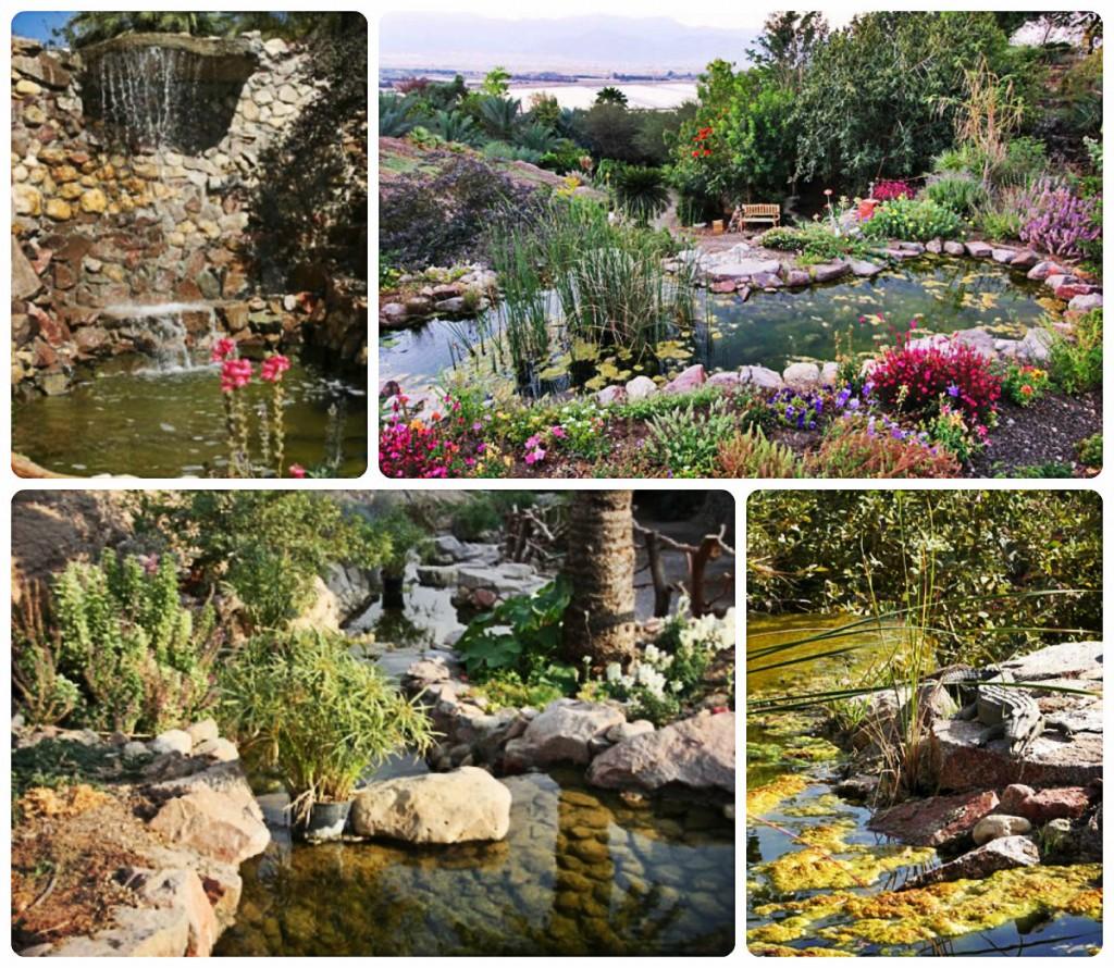 Ботанический сад Эйлат