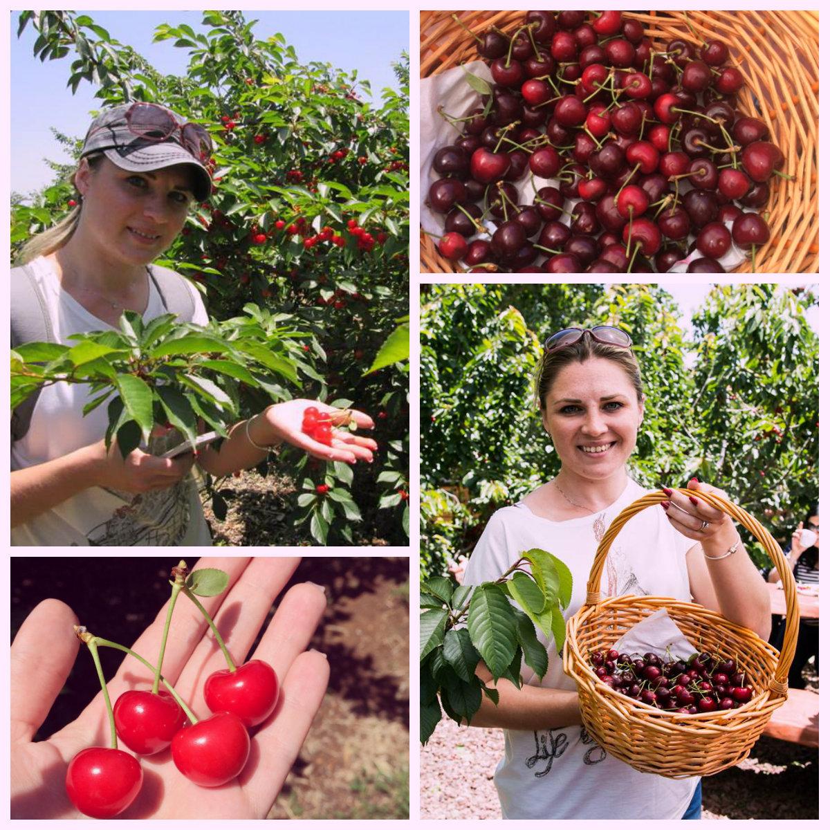 С лукошком за ягодами на Голаны