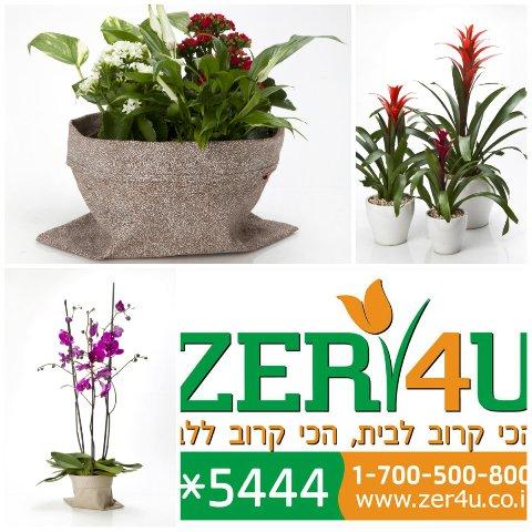 Ту би-шват и растения в вашем доме