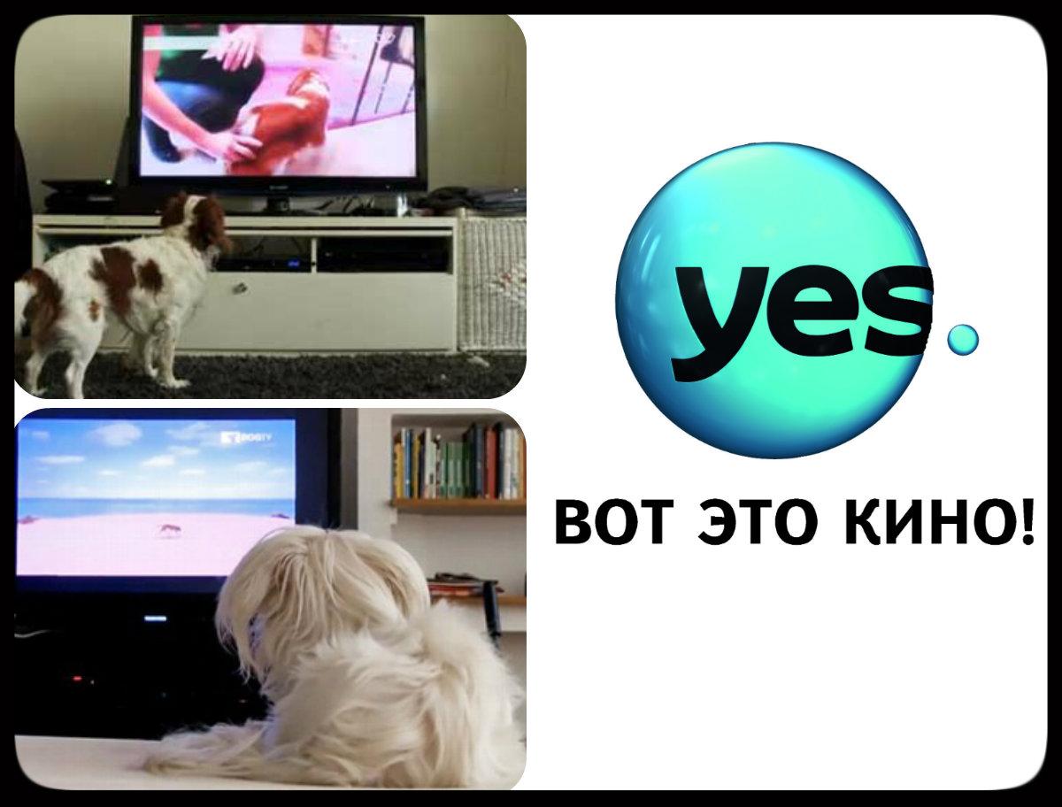 Первый в мире телеканал – няня для домашних собак DOGTV