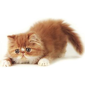 И снова кошки!!!!!! Международная выставка