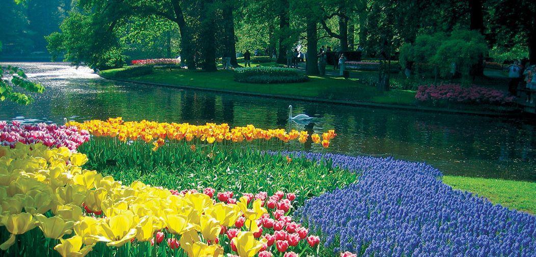 Голландия в цвету: открываем сезон тюльпанов!