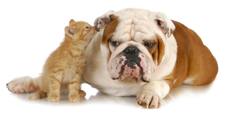 Как защитить собаку в жаркое время года