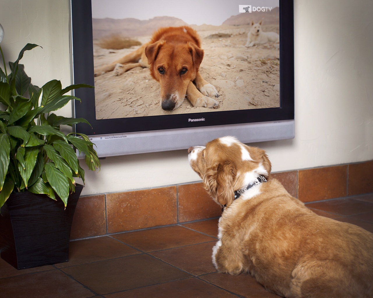 DOGTV – специальный телеканал для собак