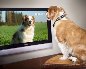 DogTV002fix