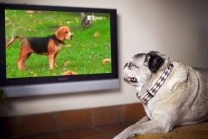 DogTV012fix