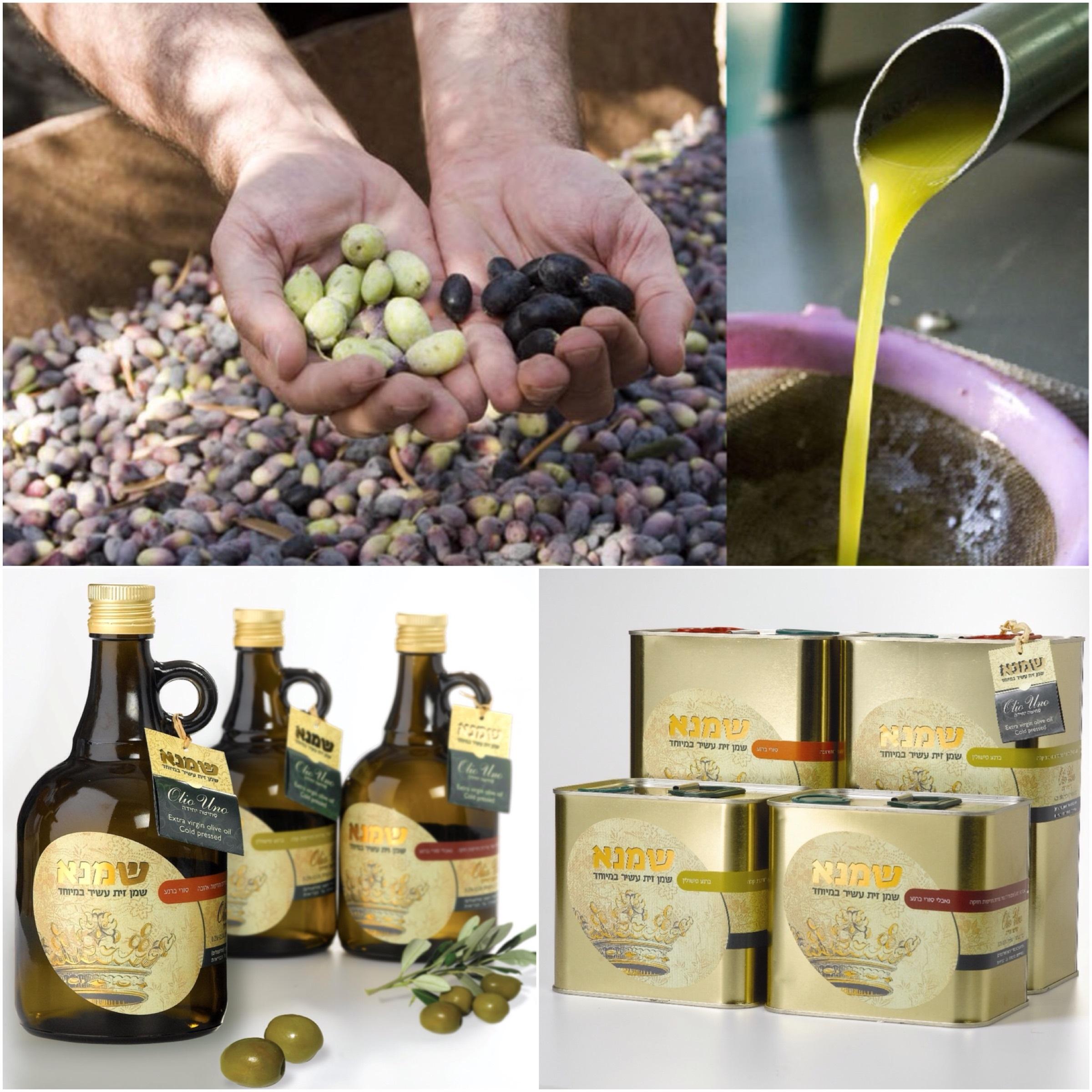 Качество «Шамна»: от момента сбора оливок до приготовления масла – несколько часов
