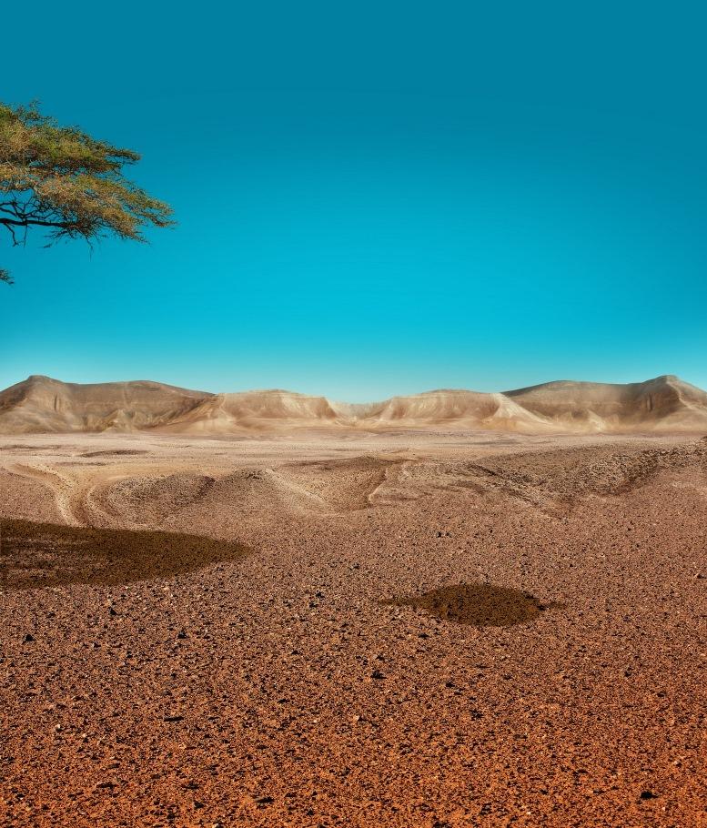 Весна в израильских пустынях