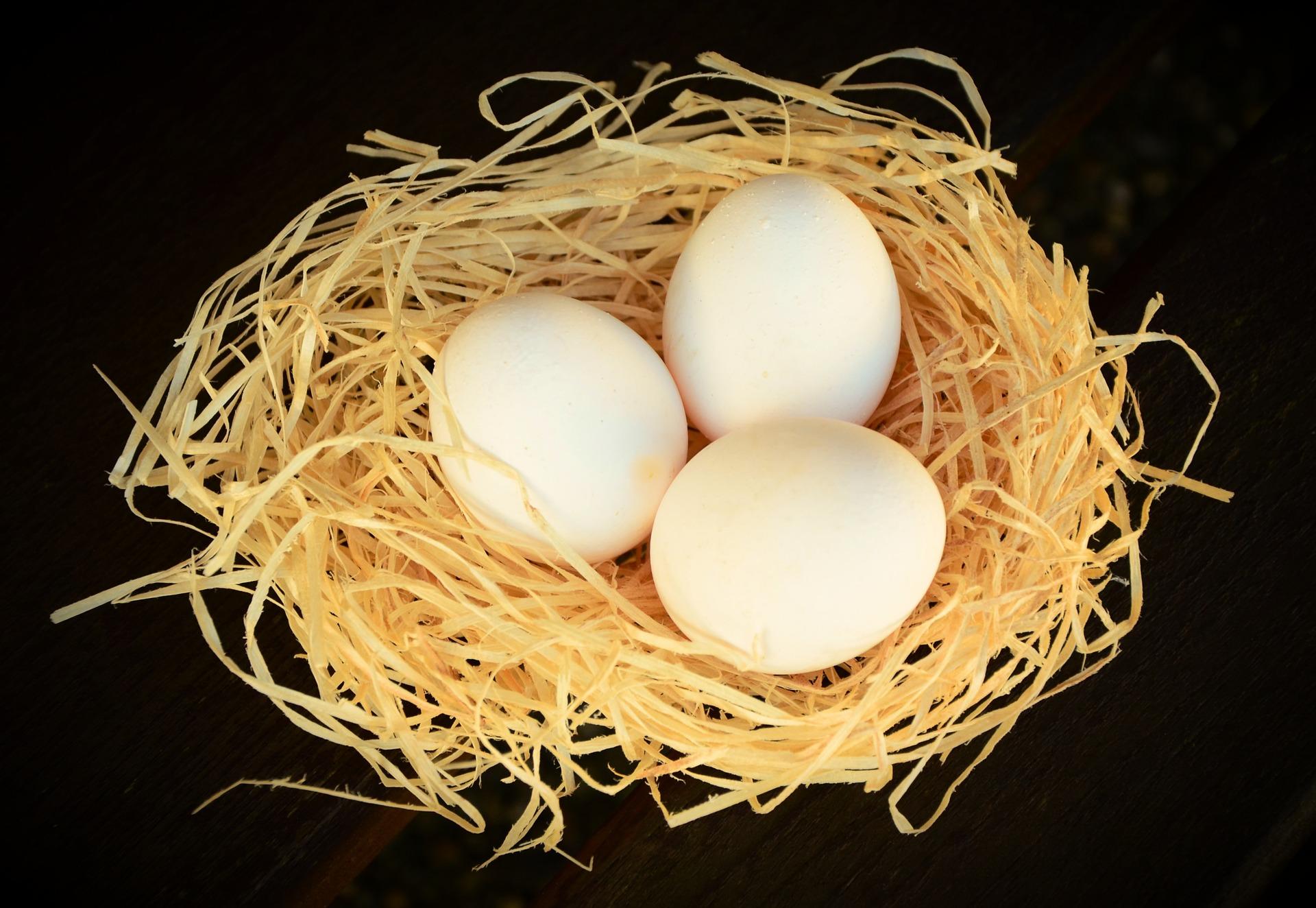 egg-1186759_1920