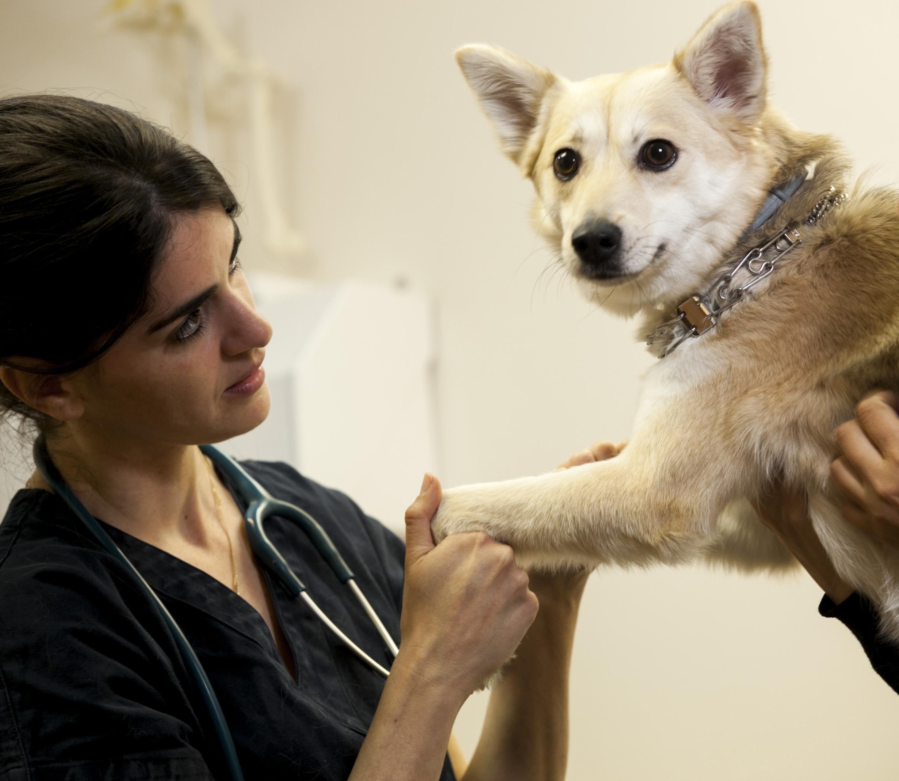 Альтернативная медицина для животных – спасает!