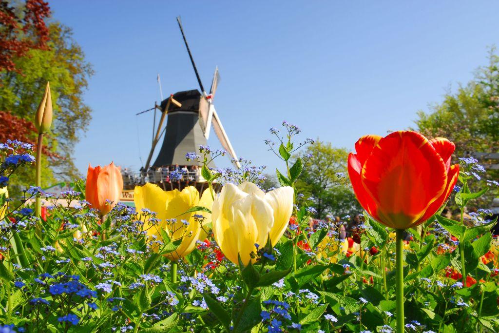 В поисках цветущих тюльпанов – круиз по Голландии и Бельгии