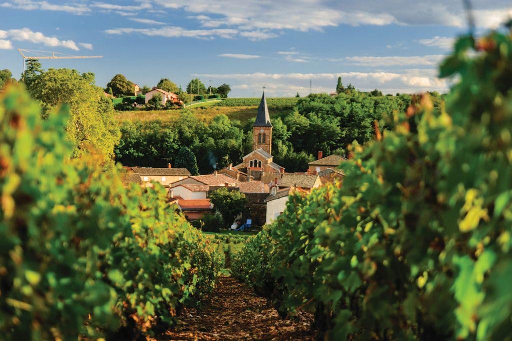 Бургундия и Прованс – рай для ценителей истории, культуры и еды!