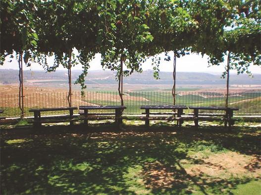 Маршрут выходного дня: винодельня в сердце Иудейских гор