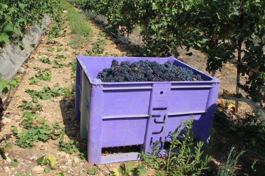 Как выбрать вино в Израиле?
