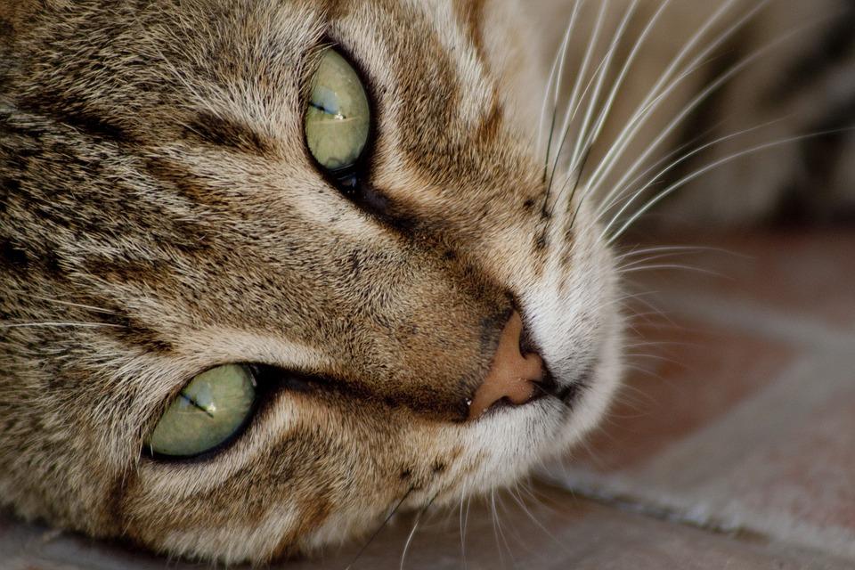 Амута «Бат-Ям любит животных» объясняет, какое участие в жизни уличных котов должен принимать человек