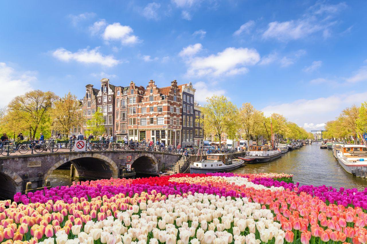 Весенняя Голландия – буйство красок и цветочный фейерверк