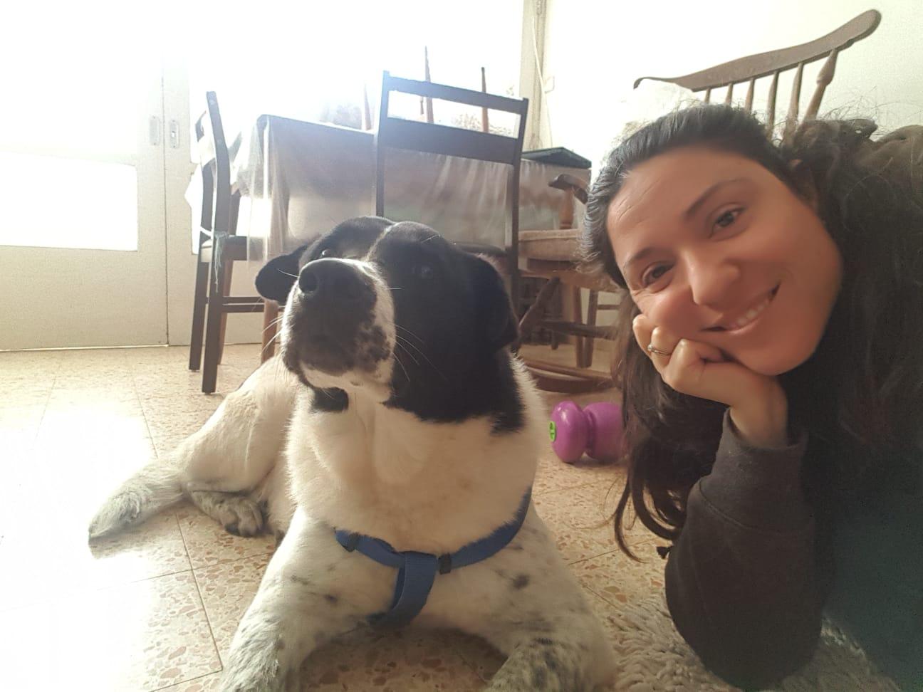 Самое время приютить собаку! Ветеринарная служба Ришон ле-Циона привезет вашего нового друга прямо к вам домой