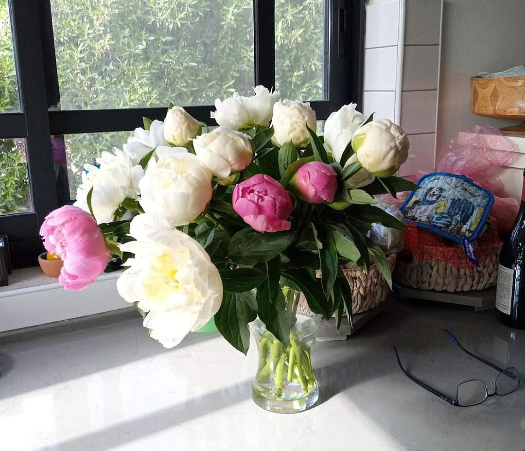 Роскошные пионы божественных оттенков и ароматов – с доставкой на дом!