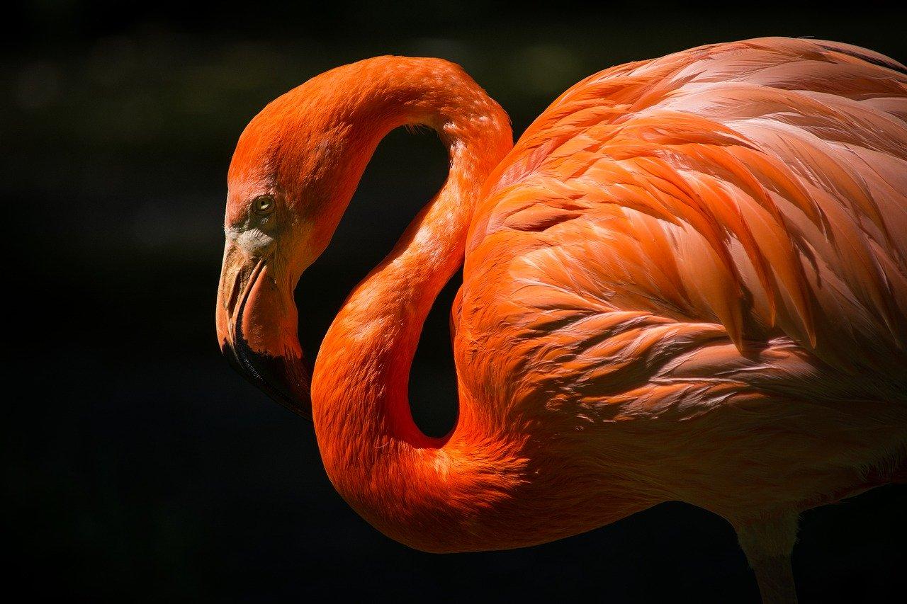 Снимайте фламинго на закате