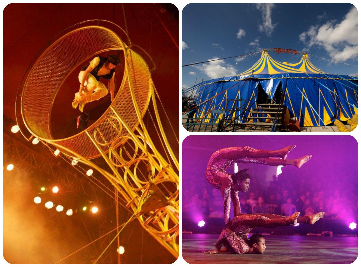 Веселый День независимости в цирке «Мадагаскар»