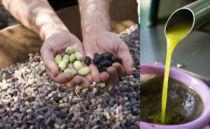 Запад и Восток: два взгляда на здоровое питание на основе оливкового масла