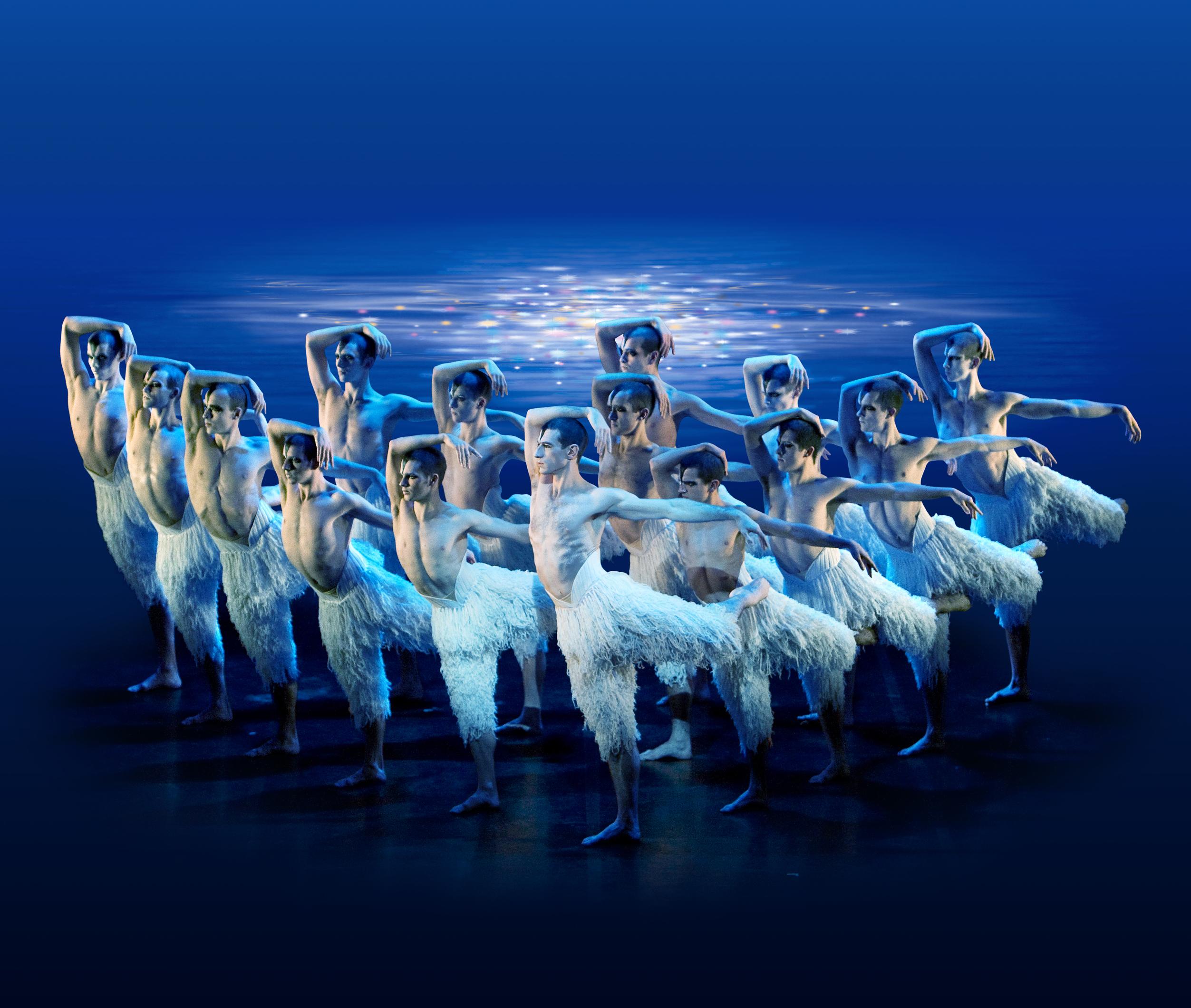 Мускулистые лебеди прилетят в Израиль