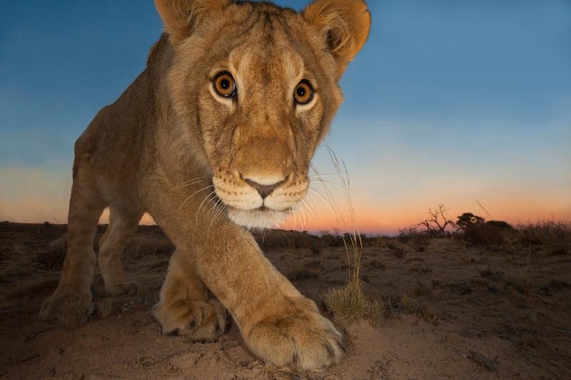 «Картины дикой природы #2»