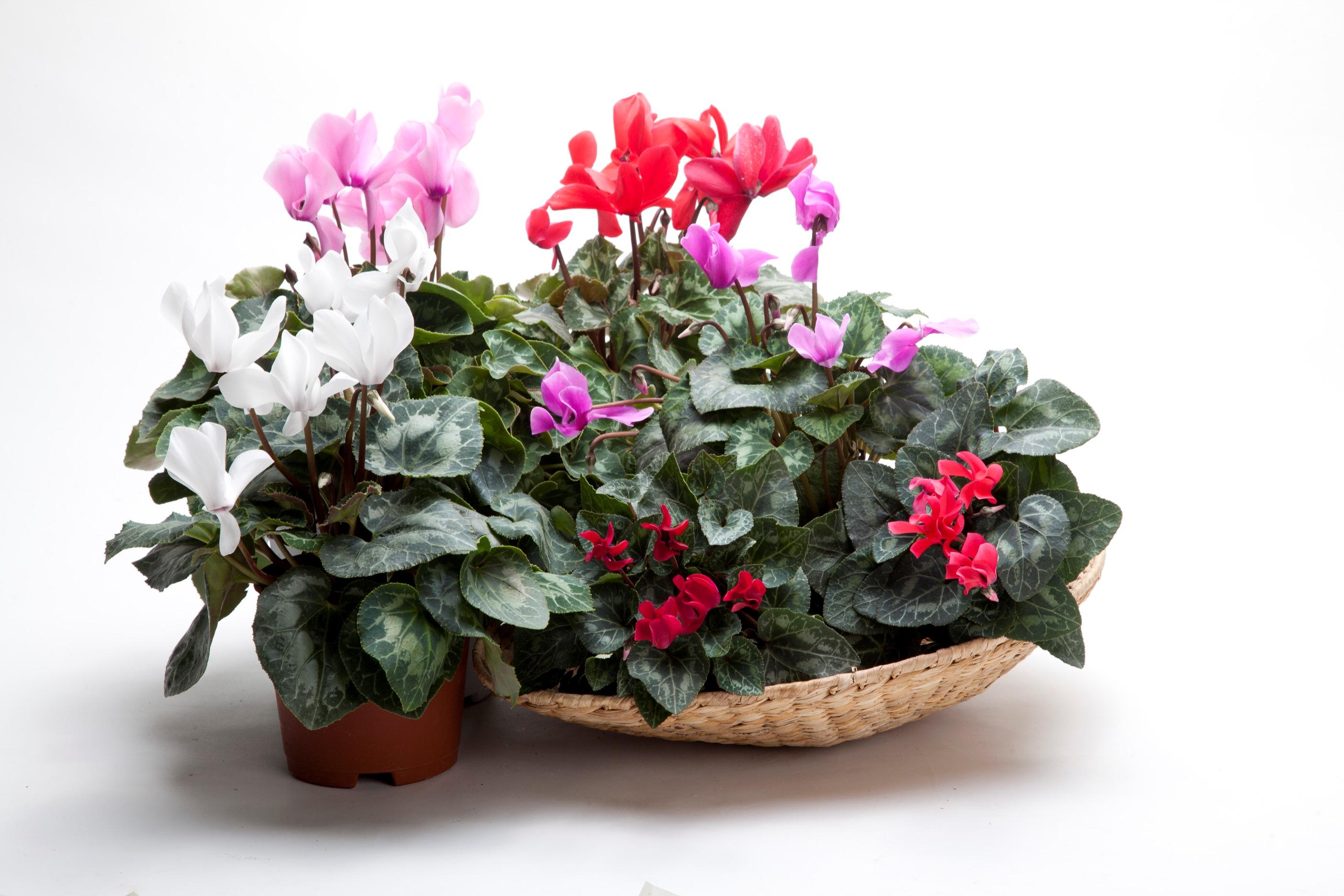 Ухаживание за цветами комнатными