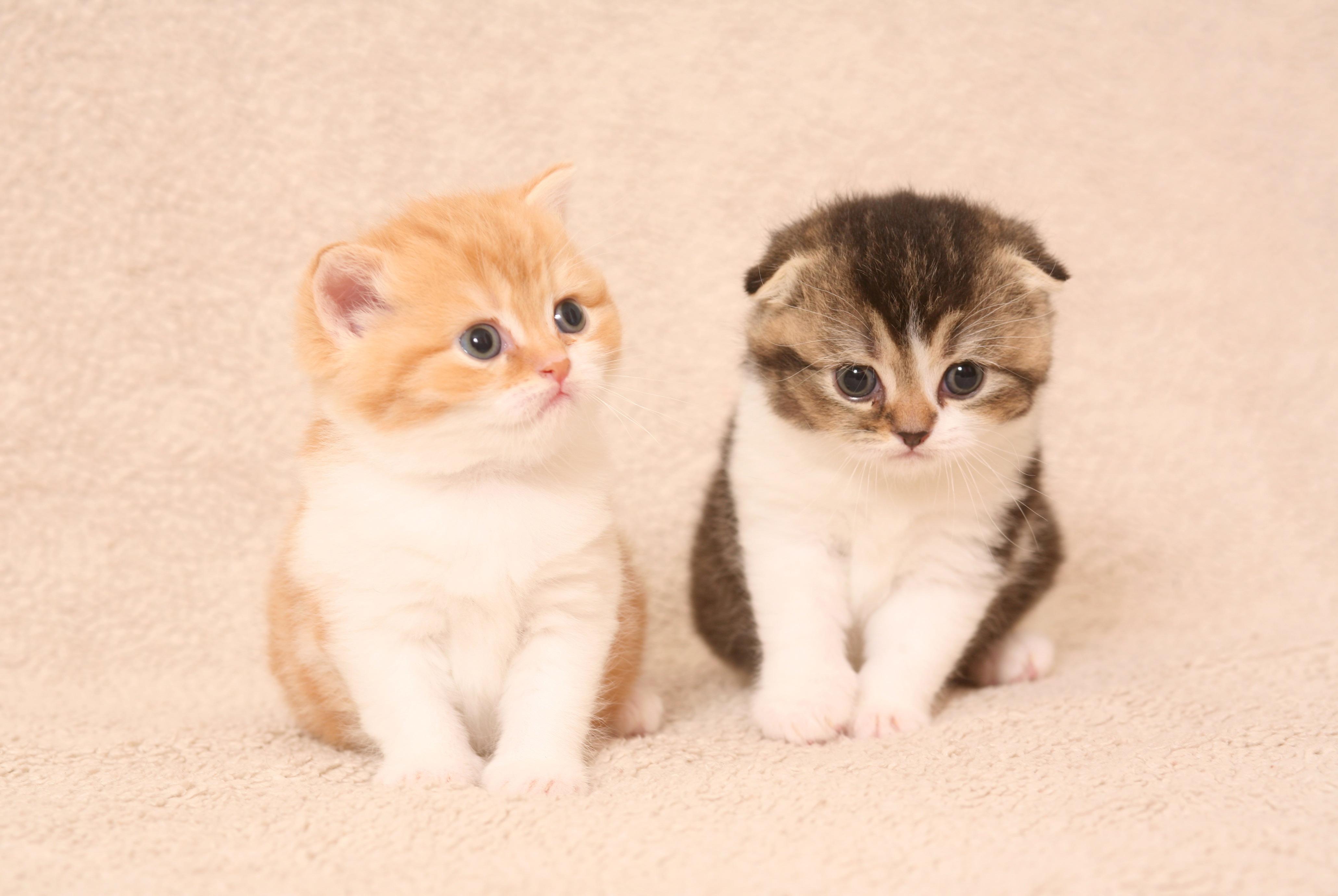 Волшебный мир кошек –  выставка кошек в Петах-Тикве