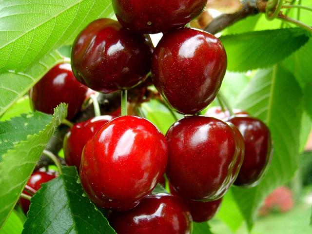 На Голаны за ягодными удовольствиями